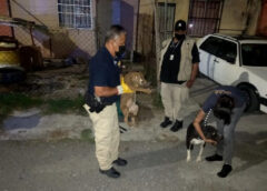 Rescata FGE a caninos maltratados