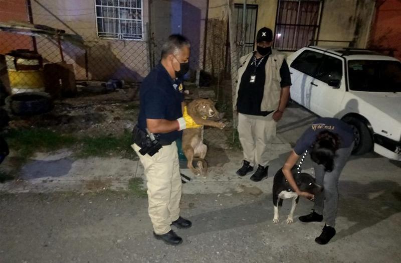 caninos rescatados